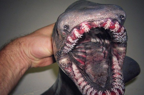 【衝撃】ロシア人、とんでもない新海魚をつり上げてしまう!!!!!!!その生き物とは、、、、、!!!!!!!!のサムネイル画像