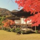 『京都、嵐山で散歩の三本。』の画像