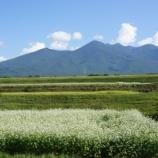 『満開の蕎麦畑』の画像