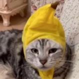 『聴いてね:猫ちゃんからの重要な動画メッセージ』の画像