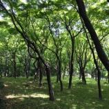 『緑百色』の画像
