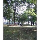 『木陰でうらうら』の画像