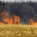 『遺伝子組み換え畑の焼却』の画像