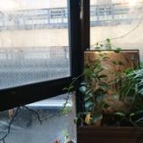 『京都ビストロ「ピエール プレシウーズ」で京野菜たっぷりのランチコース🍴』の画像