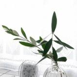 『グリーンと花のある暮らし! 庭の小枝を飾ってグリーンを楽しむ!!』の画像