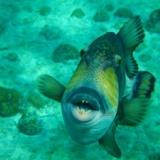 【閲覧注意】海に潜む恐怖…! 世界最強の海洋生物ランキングTOP10!!!!!!