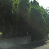 『生垣』の画像