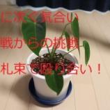 『ファイヤタブレット買うなら一緒にiPadな話!!!!』の画像