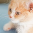私が猫アレルギーだと言った翌週にトメが猫を飼い始めた。なのに夫は私を義実家に連れて行こうとする。これはエネ夫ですか?しかも私が実家に逃げてきたら、さらに最低なことを・・・