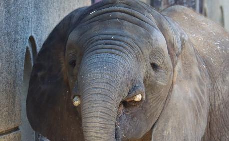 ゾウが目を細める「幸せの時間」