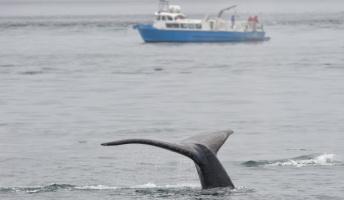 皆さんは、「捕鯨」に賛成?反対?