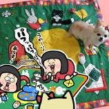 『人間用のベビーマットで愛犬に遊んでもらう方法』の画像