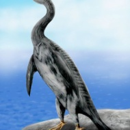 ペンギンモドキ
