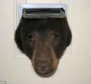 【画像】ネコ用の入り口にツキノワグマが頭突っ込んで抜けなくなっててワロタwww