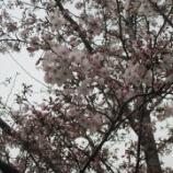 『【北九州】花壇が華やかに』の画像