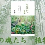 『光の魂たち 植物編Amazonでの販売開始「あとがき」抜粋』の画像