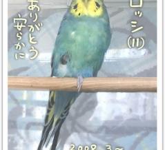 老鳥ズ・ロッシ(11)天国へ行きました。