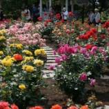『α900で歩く横浜 薔薇の彩り編』の画像