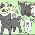 毎日が発見ネット更新のお知らせ/仲が良さそうな猫たち写真