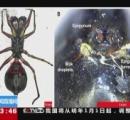 おっぱいで子育てするクモを発見 哺乳類以外では初めて ―中国