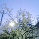 『花霞』の画像