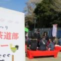 第34回湘南江の島春まつり2017 その8(「野点」コーナー)
