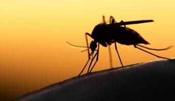 蚊「ただ血液だけ吸っていくのもなんか悪い気がするなぁ…」