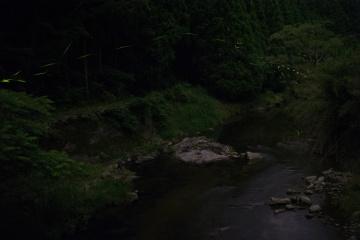 御杖村でほたる観察【2015】