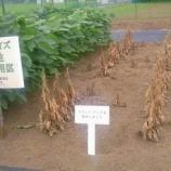 『日本は世界一【農薬使用量が多い国】』の画像