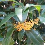 『秋の匂い』の画像
