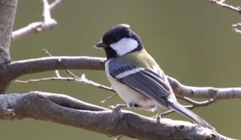 森ニートだけど鳥と意思疎通した