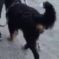 イヌは人間の最高のパートナーだ! 片足のない飼い主と散歩する → 犬はこうした…