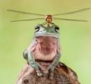 【画像】トンボと合体したカエルが発見される