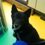 『富山店にNEW看板犬誕生!?』の画像