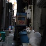 『京島おそるべし』の画像