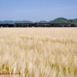 『▲SL人吉 麦畑を快走』の画像