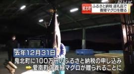 【愛媛】山の町へ100万円のふるさと納税、返礼品として57.6キロのマグロ発送