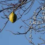 『フォト短歌「一粒の花梨」』の画像