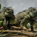1923年4月17日の今日は、 恐竜の日