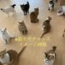猫モテチャンス突入