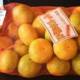 『国東の食環境(267)早生ミカン』の画像