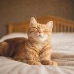 猫ってずっと室内飼いでも平気なん?