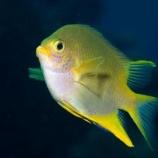 『お魚も顔認識』の画像
