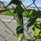 『収穫です。』の画像