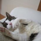『【ネコ】今まで撮り貯まった猫写真を開放する』の画像
