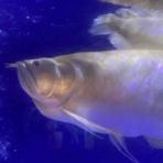 大型熱帯魚屋  ZEEBRA