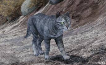 猫(Cat)