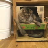 『猫アパート』の画像