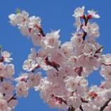 『小岩~お茶の水の春 [写真] WX500』の画像