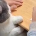 【ネコ】 女の子が勉強していた。邪魔なんかしないよ♪ → 見守る猫はこんな感じ…